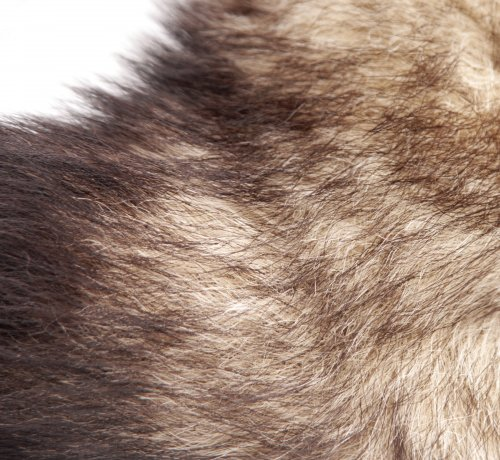 Metal Fox Tail Anal Plug Close Up Of Fir